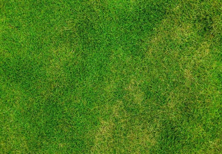 How to Keep Your Lawn Looking Good and Weed Free