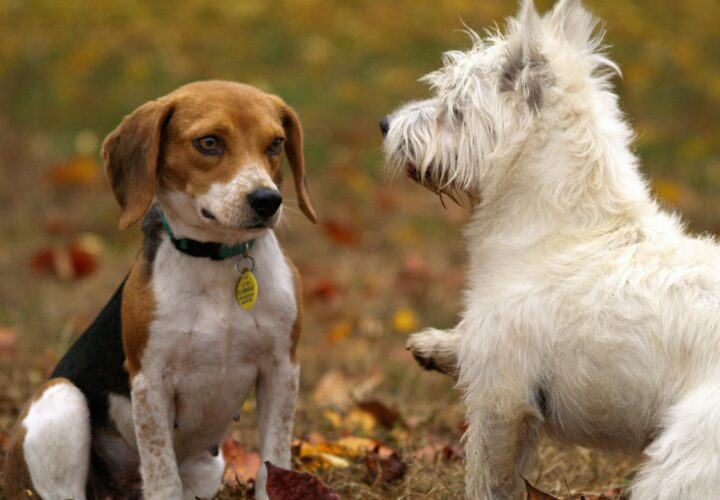 What You Should Know About Healthy Oils for Your Pets