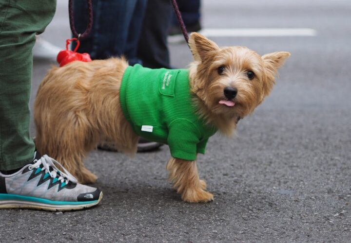 The Usefulness of Pet Apparel and the Growing Market