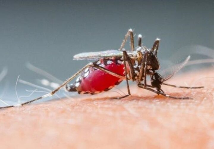8 Natural Ways to Keep Mosquitoes Away From You