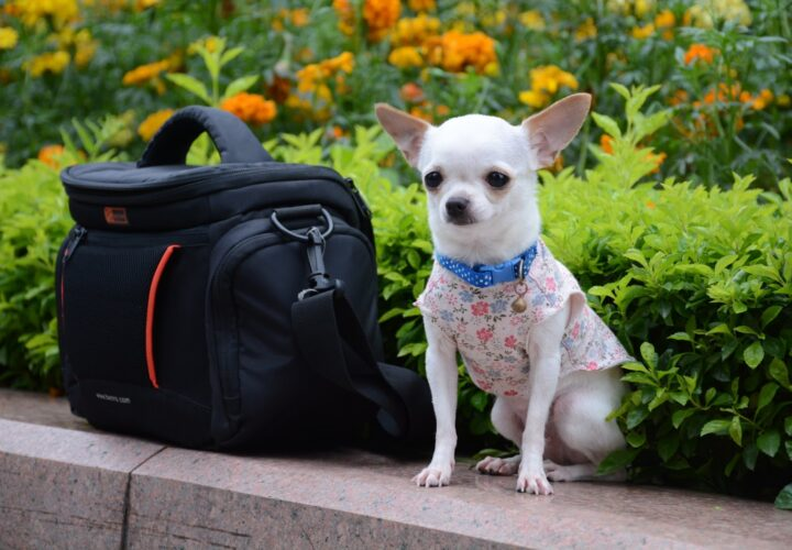 Things to Know Before Buying a Pet Carriers For Airlines
