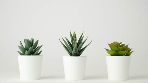 Ultimate Benefits of Growing Succulents
