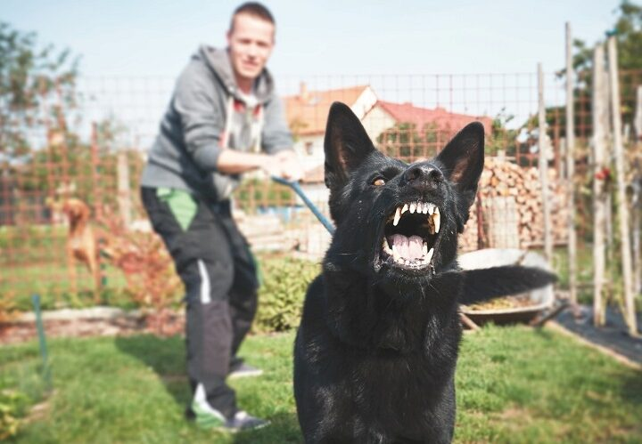 4 Useful Tips for Hiring the Best Dog Bite Attorney