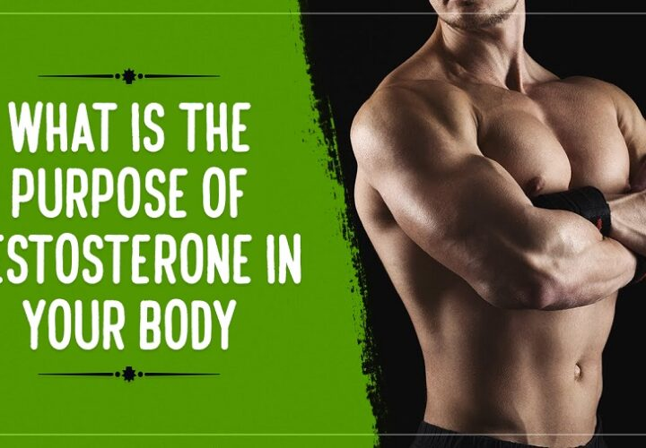 What Is the Purpose Of Testosterone In Your Body?