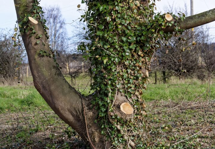 What Are The Advantages Of Hiring A Tree Surgeon?