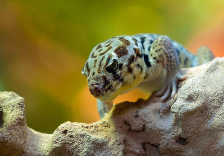 A Nutrition Guide for Exotic Animals