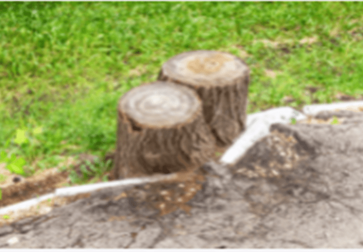 Contractor Guide: General Guidelines for Efficiently Removing Large Trees