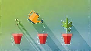 Steps on how to grow marijuana seeds indoors
