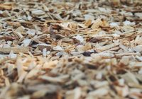 Branch Out With a Business Venture in Forestry Mulching: Essential Mulching Equipment and Tips