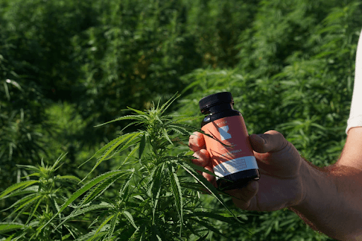 Are Capsules The Best Way To Use CBD?